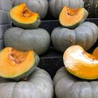 Picture of JARRAHDALE PUMPKIN CUT