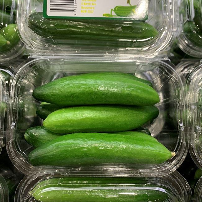 Picture of BABY CUCUMBERS