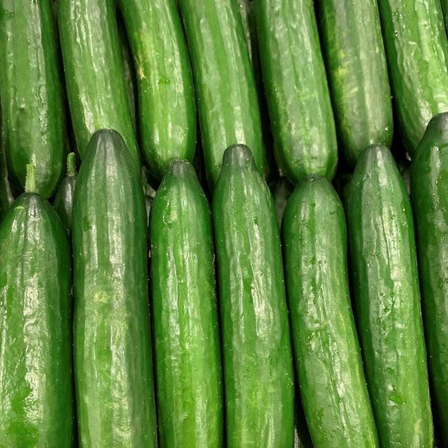 Picture of LEBANESE CUCUMBER