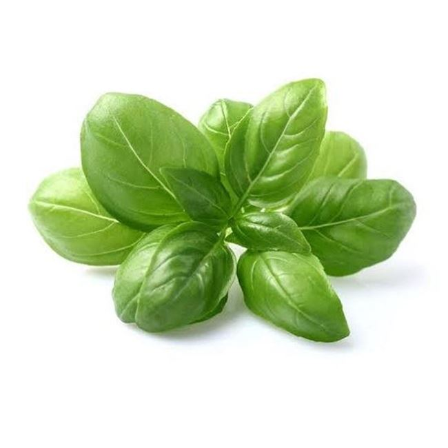Picture of BASIL (bunch)