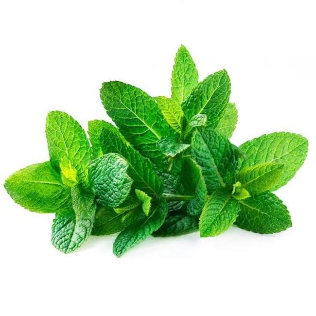 Picture of MINT (bunch)